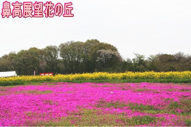 4.20鼻高展望花の丘