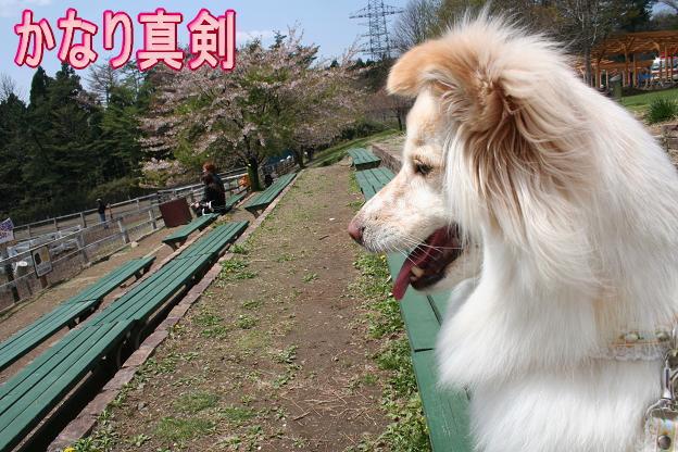 4.21モコちゃん真剣