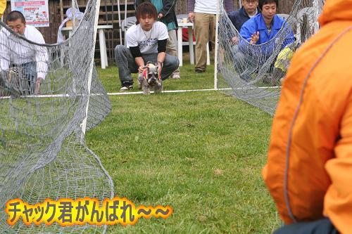 4.27チャック君がんばれ〜1