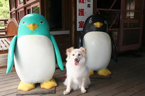 5.2モコとペンギンさん
