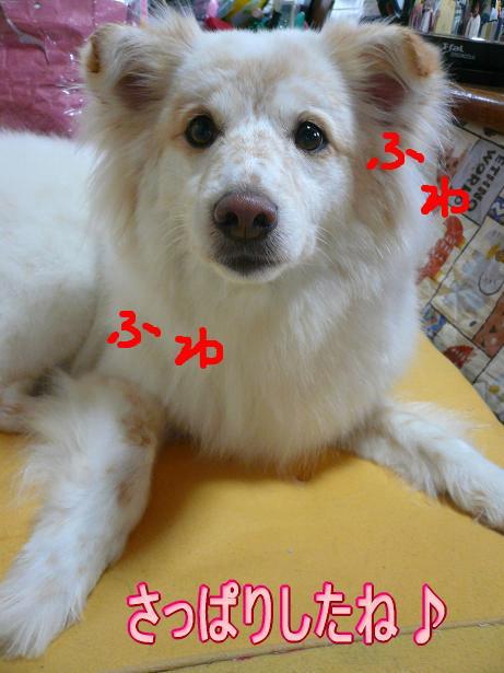 5.11ふわふわモコ