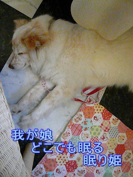 6.6眠り姫