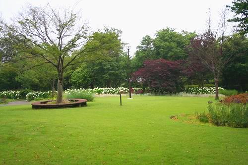 6.28芝生がきれい