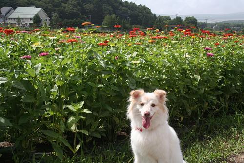 8.29山中湖花の都公園1