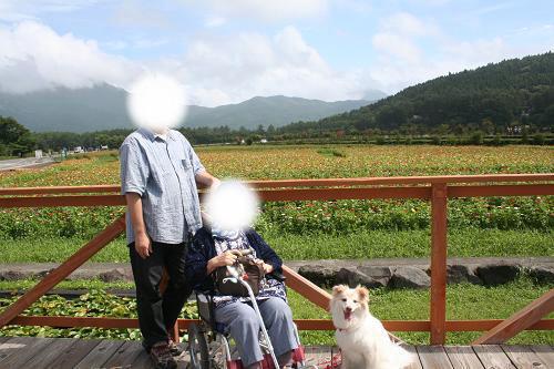 8.29山中湖花の都公園2