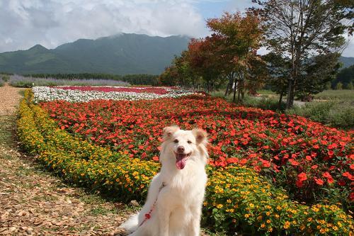 8.29山中湖花の都公園4