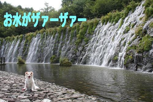 8.29水ザァーザァー