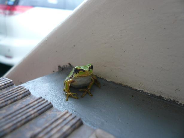 8.30雨蛙さん?