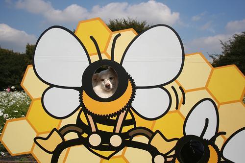10.10モコ蜂