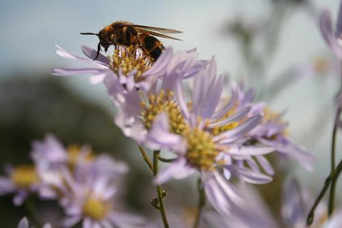 10.10蜂さん
