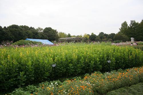 10.10バーべキューガーデン花畑