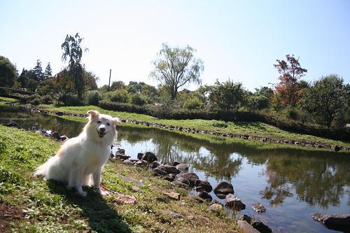 10.16昭和記念公園