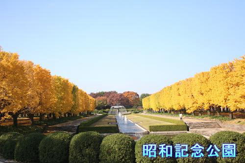 11.17昭和記念公園