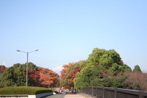 11.17すっかり秋だね