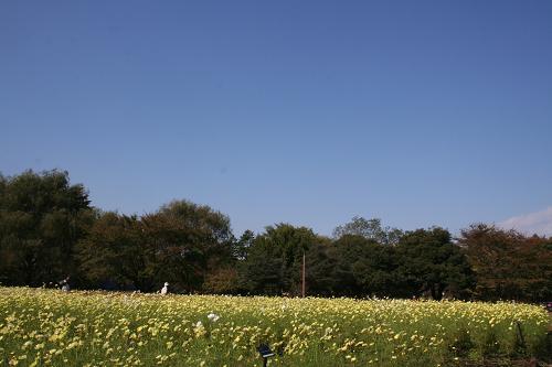 10.27昭和記念公園