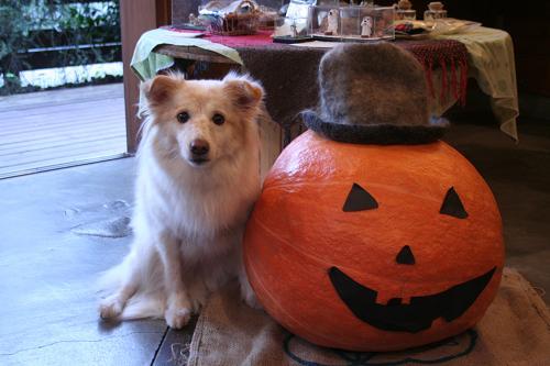 10.27モコとかぼちゃ2