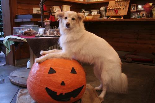10.27モコとかぼちゃ3