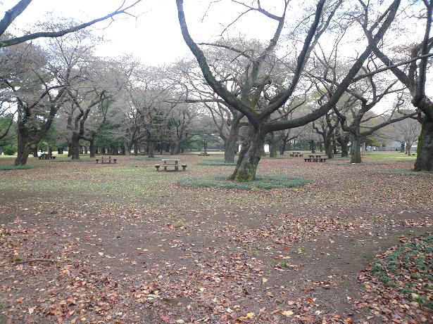 11.5小金井公園