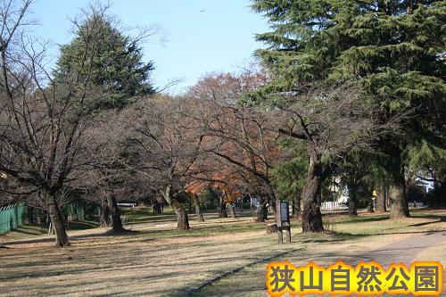 11.21狭山自然公園1