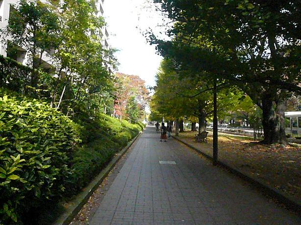 11.23いいお散歩道