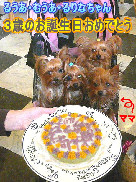 12.1おめでとう〜