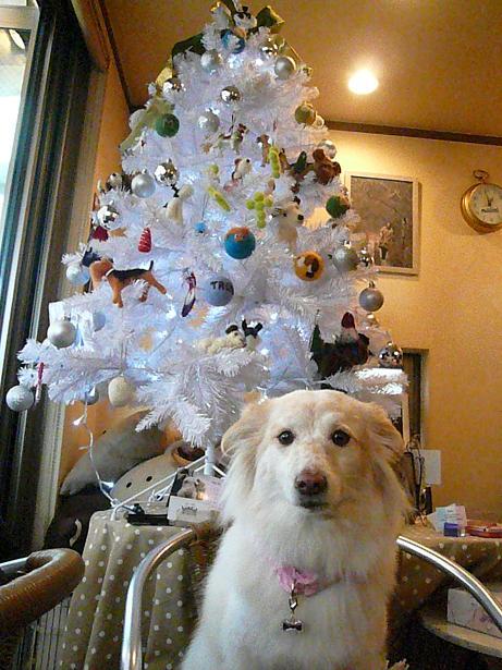 12.14モコとクリスマスツリー