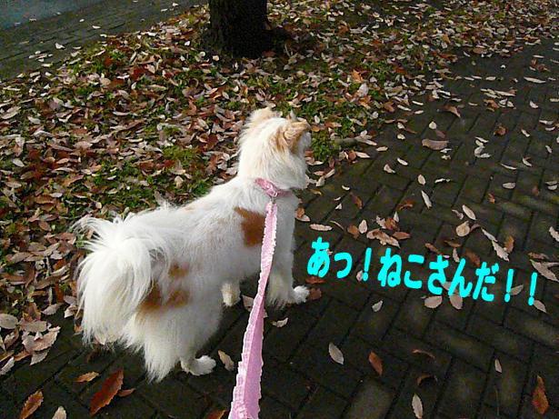 12.14お散歩
