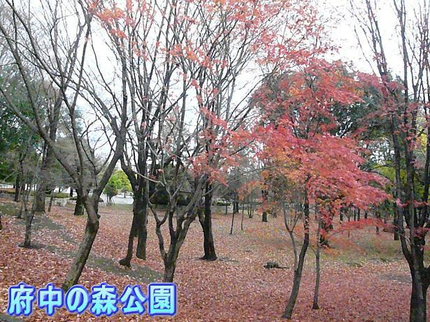 12.14すっかり冬景色