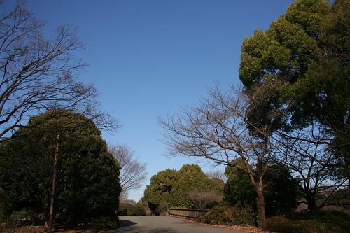 12.19真っ青な空と緑