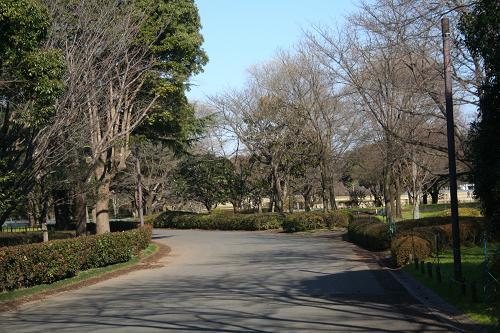 12.19昭和記念公園2
