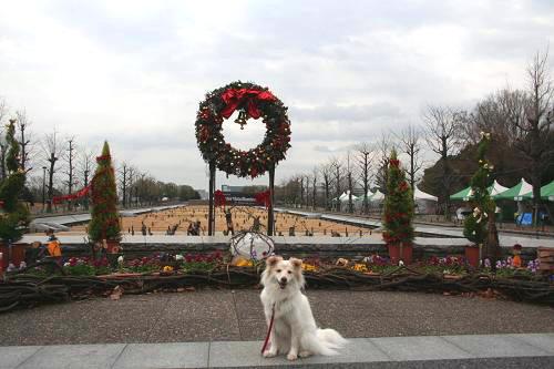 12.22昭和記念公園1