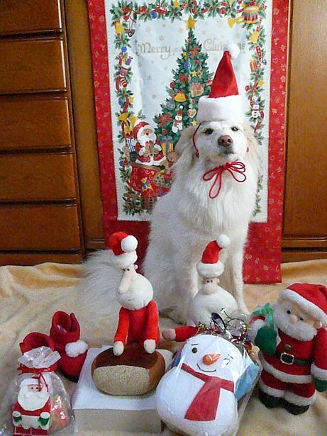 12.23メリークリスマス4