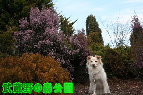 12.24武蔵野の森公園1