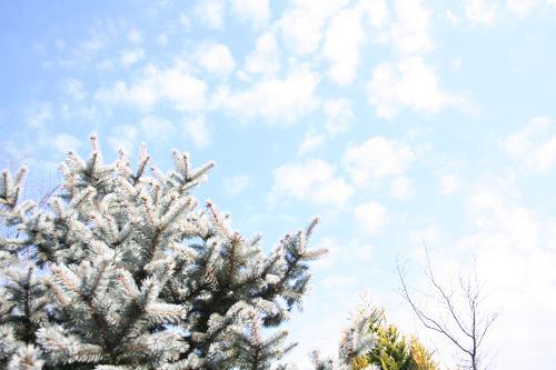 12.24青い空と可愛い雲