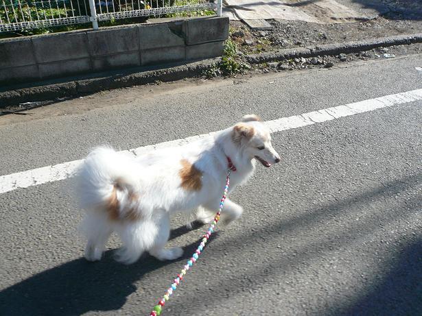 1.1初お散歩