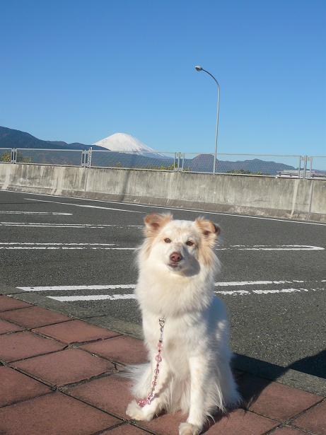 1.7モコと富士山