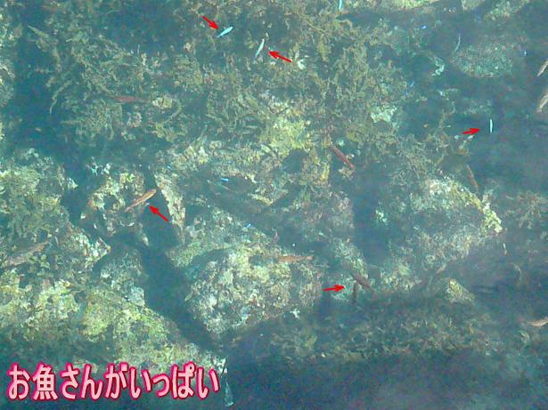 1.7お魚さんいっぱい