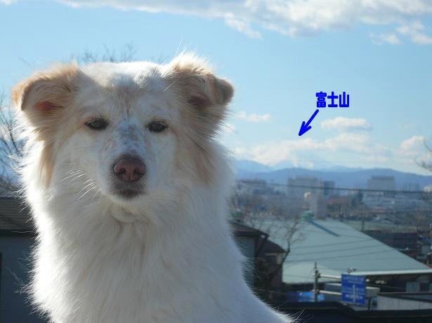 1.13モコと富士山