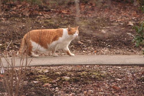 1.26猫さんお散歩