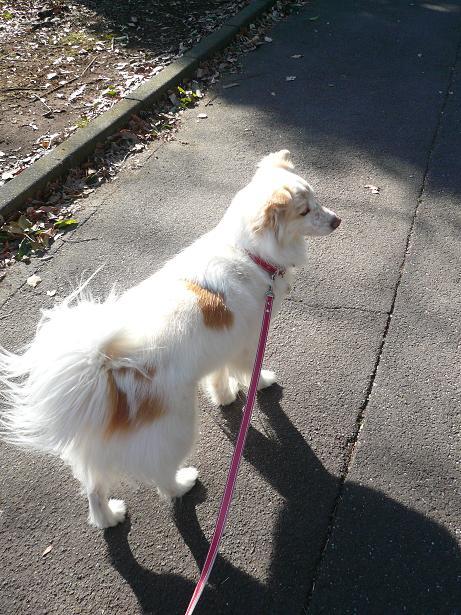 2.2お散歩