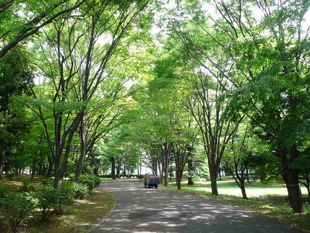 5.15府中の森公園1