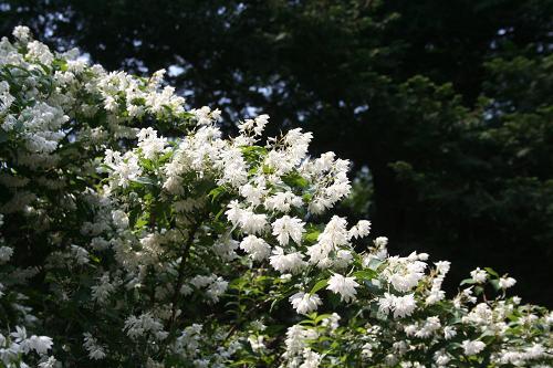 5.26お花1