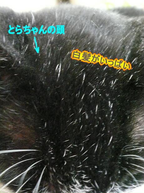 6.20とらちゃん4