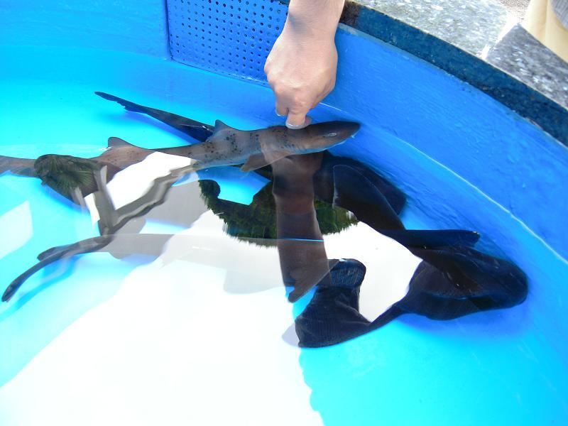 7.4鮫肌体験