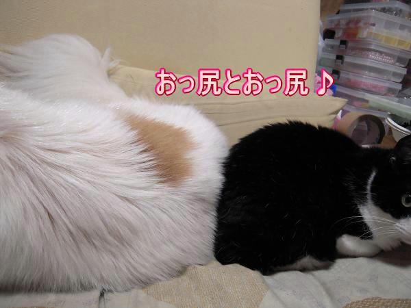 7.27とらちゃんとモコ1