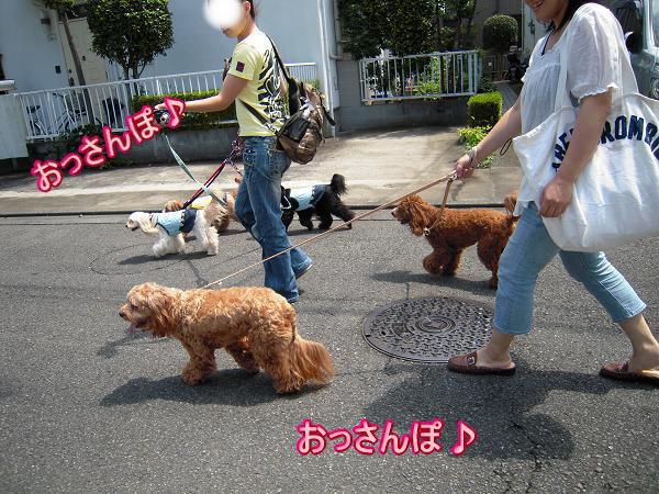 8.3お散歩〜1