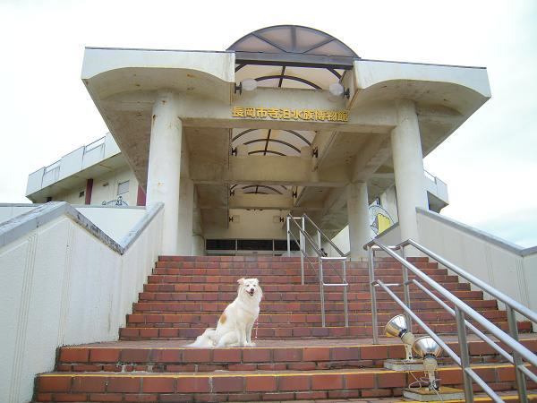 8.14寺泊水族博物館