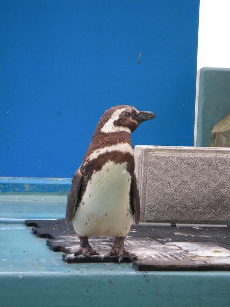 8.14ペンギンさん