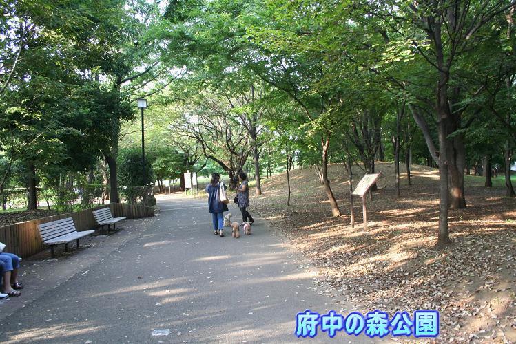 8.26府中の森公園