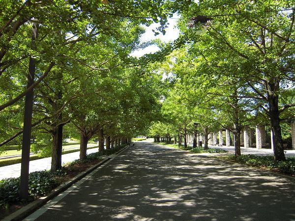 9.10昭和記念公園2
